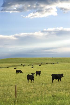Antibiotics Used On Livestock